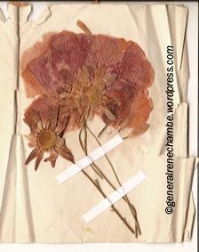 Fleur Août 1918